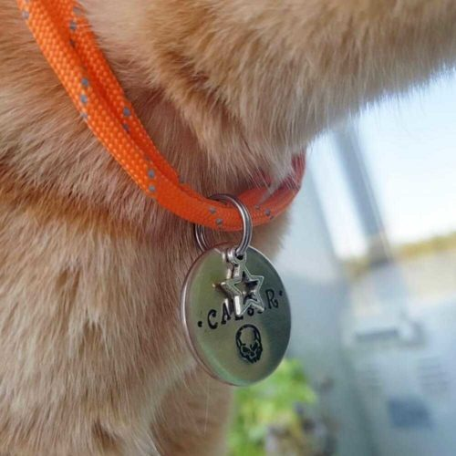 Адресник для собаки CAESAR-3