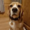 Адресник для собаки ДИРЕКТОР-3