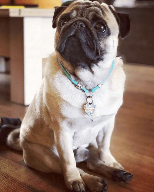 Адресник для собаки FRANT-3