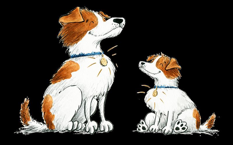 Адресник для собаки – обзор